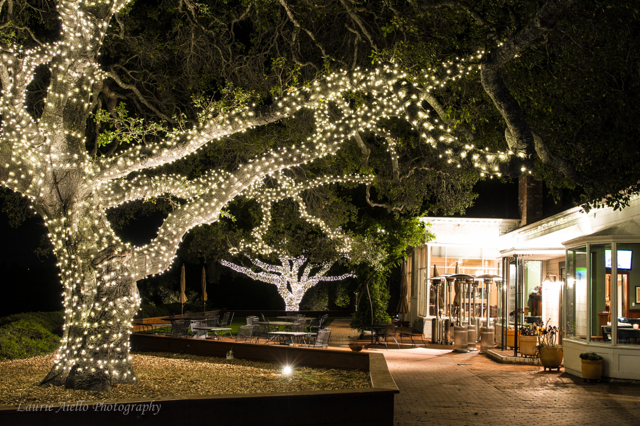 Hollins House Oak Tree